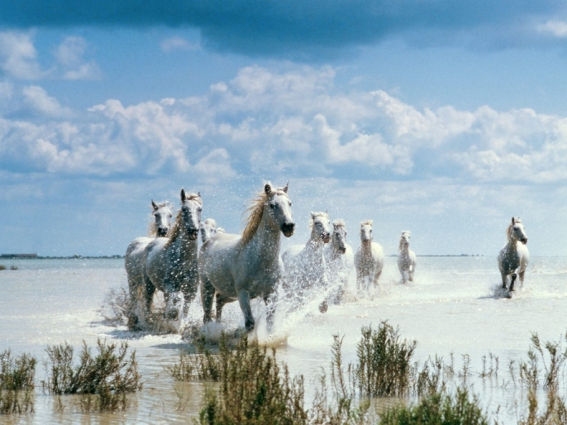 29507 download wallpaper Horses, Animals screensavers and pictures for free