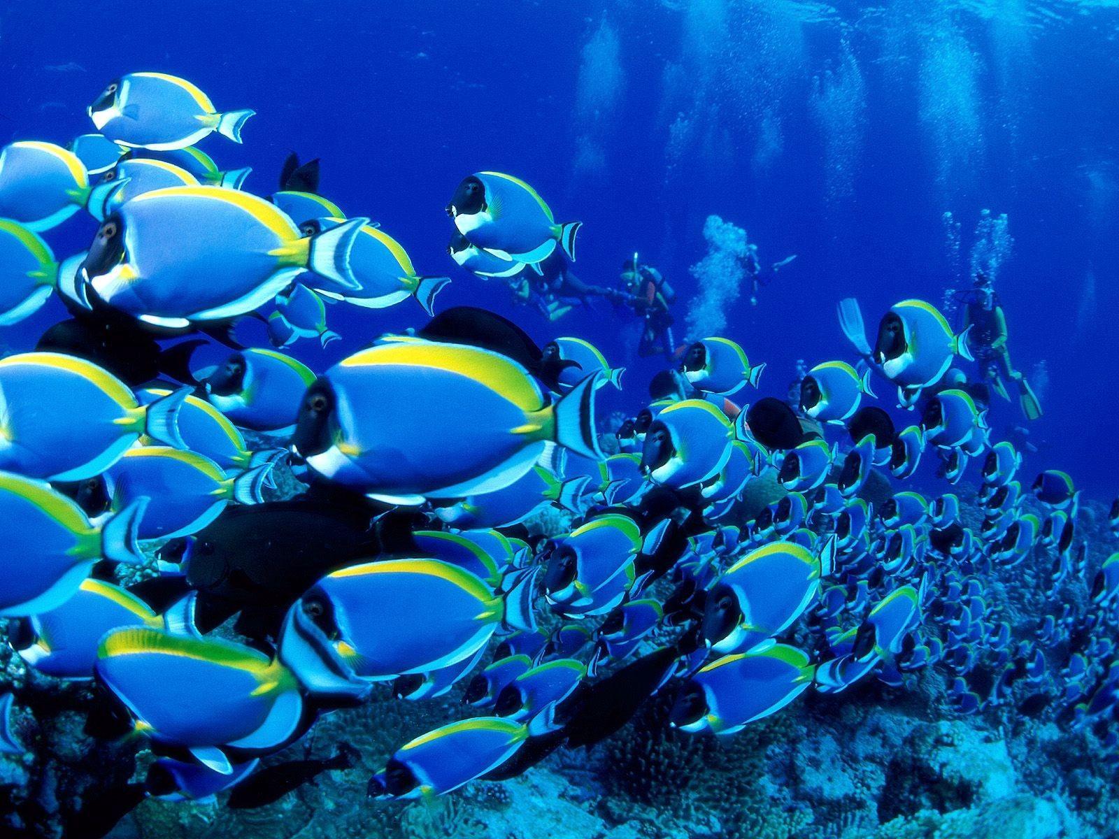 90733 Заставки и Обои Рыбы на телефон. Скачать Рыбы, Животные, Океан, Подводный Мир, Множество картинки бесплатно