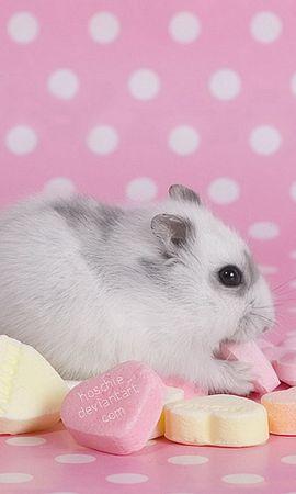 11200 baixar papel de parede Animais, Hamsters, Roedores - protetores de tela e imagens gratuitamente
