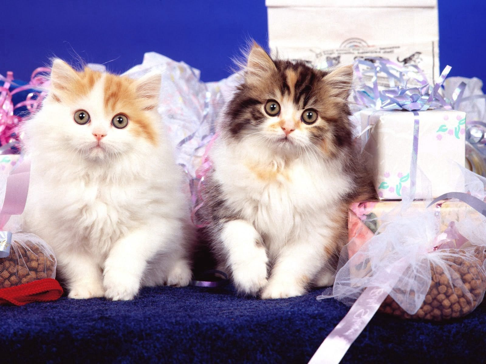 108901 Screensavers and Wallpapers Kittens for phone. Download Animals, Fluffy, Couple, Pair, Kittens pictures for free