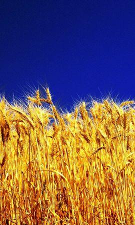 48452 скачать обои Растения, Пейзаж, Поля, Пшеница - заставки и картинки бесплатно