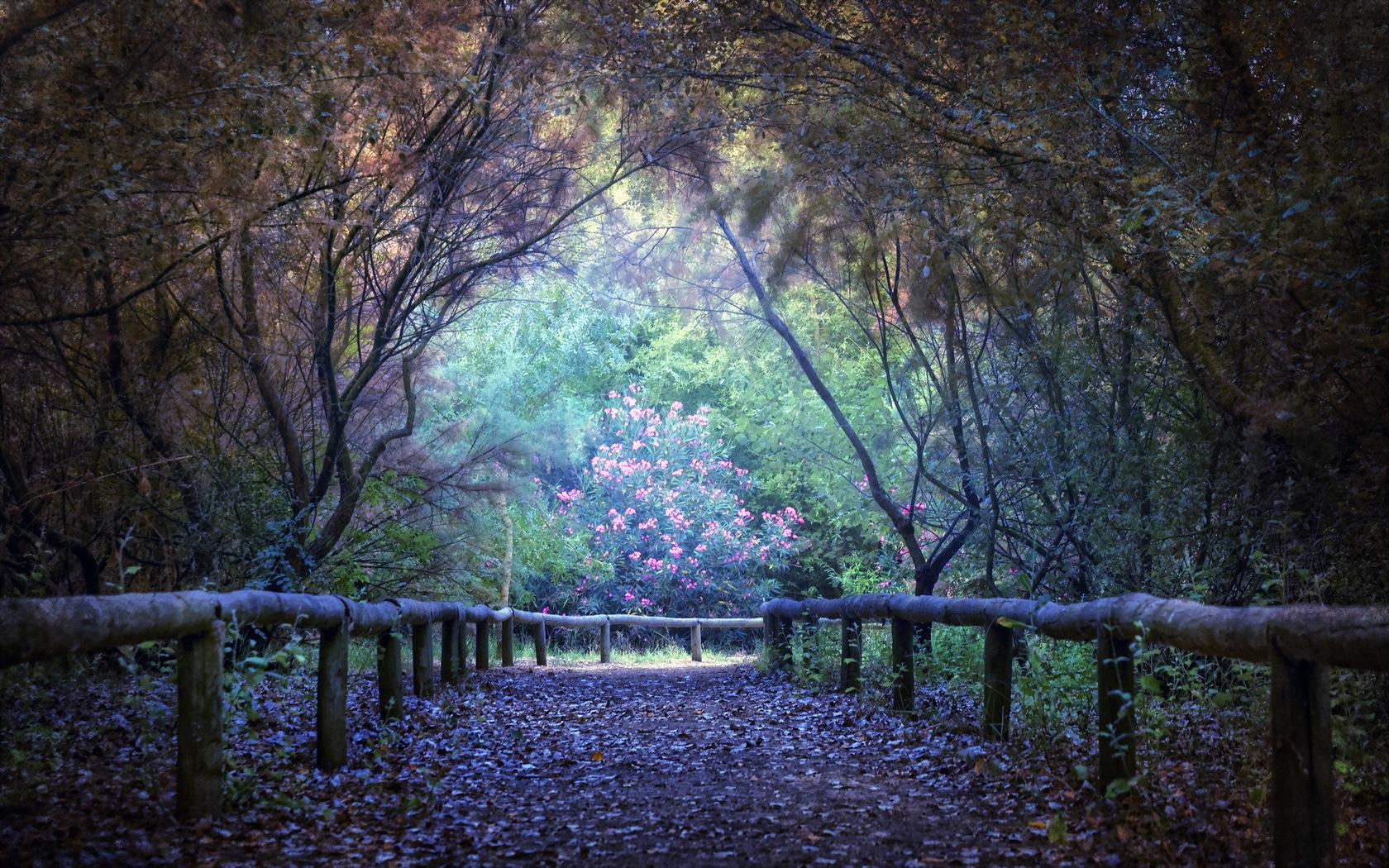 38230 скачать обои Пейзаж, Деревья, Дороги - заставки и картинки бесплатно