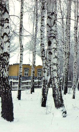 360 скачать обои Пейзаж, Зима, Дома, Деревья - заставки и картинки бесплатно