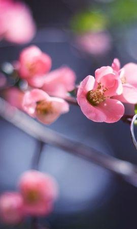14909 скачать обои Растения, Цветы, Любовь - заставки и картинки бесплатно