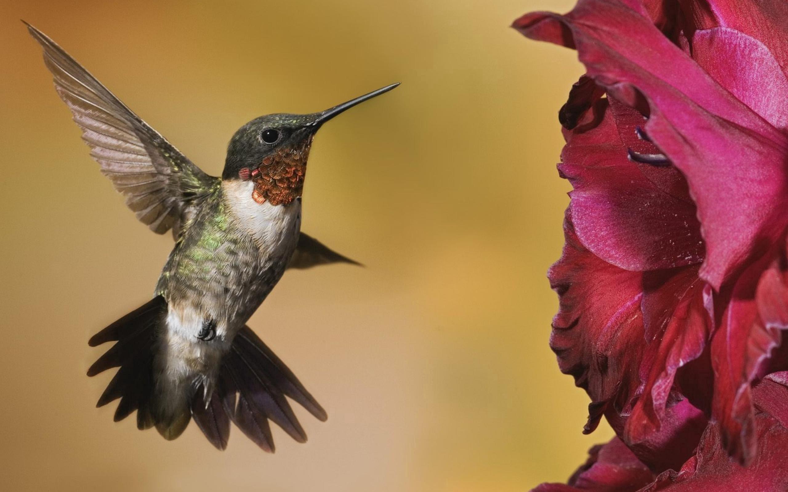 58214 économiseurs d'écran et fonds d'écran Oiseau sur votre téléphone. Téléchargez Oiseau, Animaux, Fleurs, Colibris images gratuitement