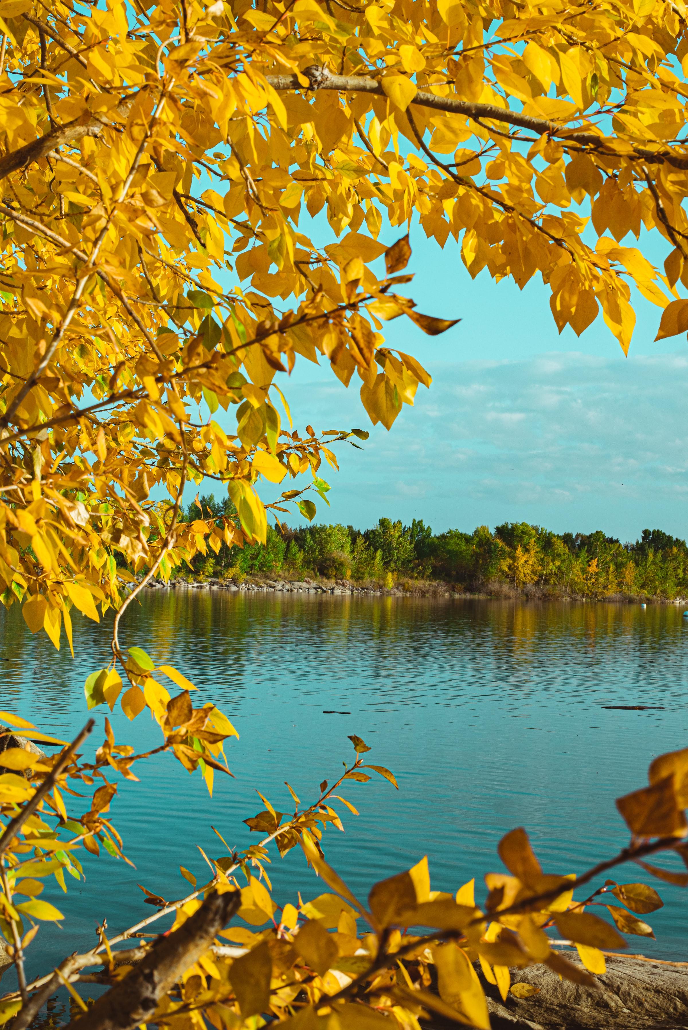 Лучшие заставки и фоны Осень на мобильный