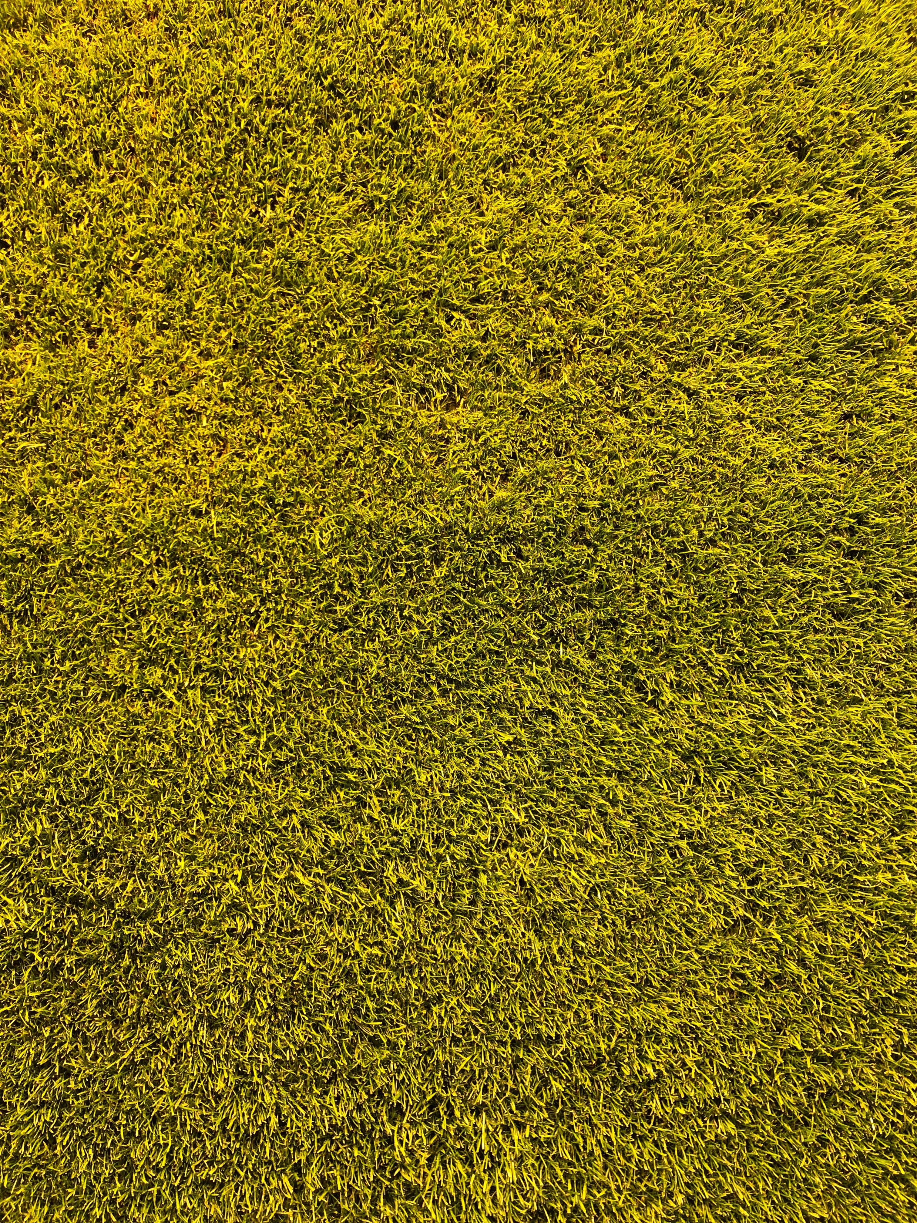 94398 скачать обои Трава, Текстура, Текстуры, Зеленый, Газон - заставки и картинки бесплатно