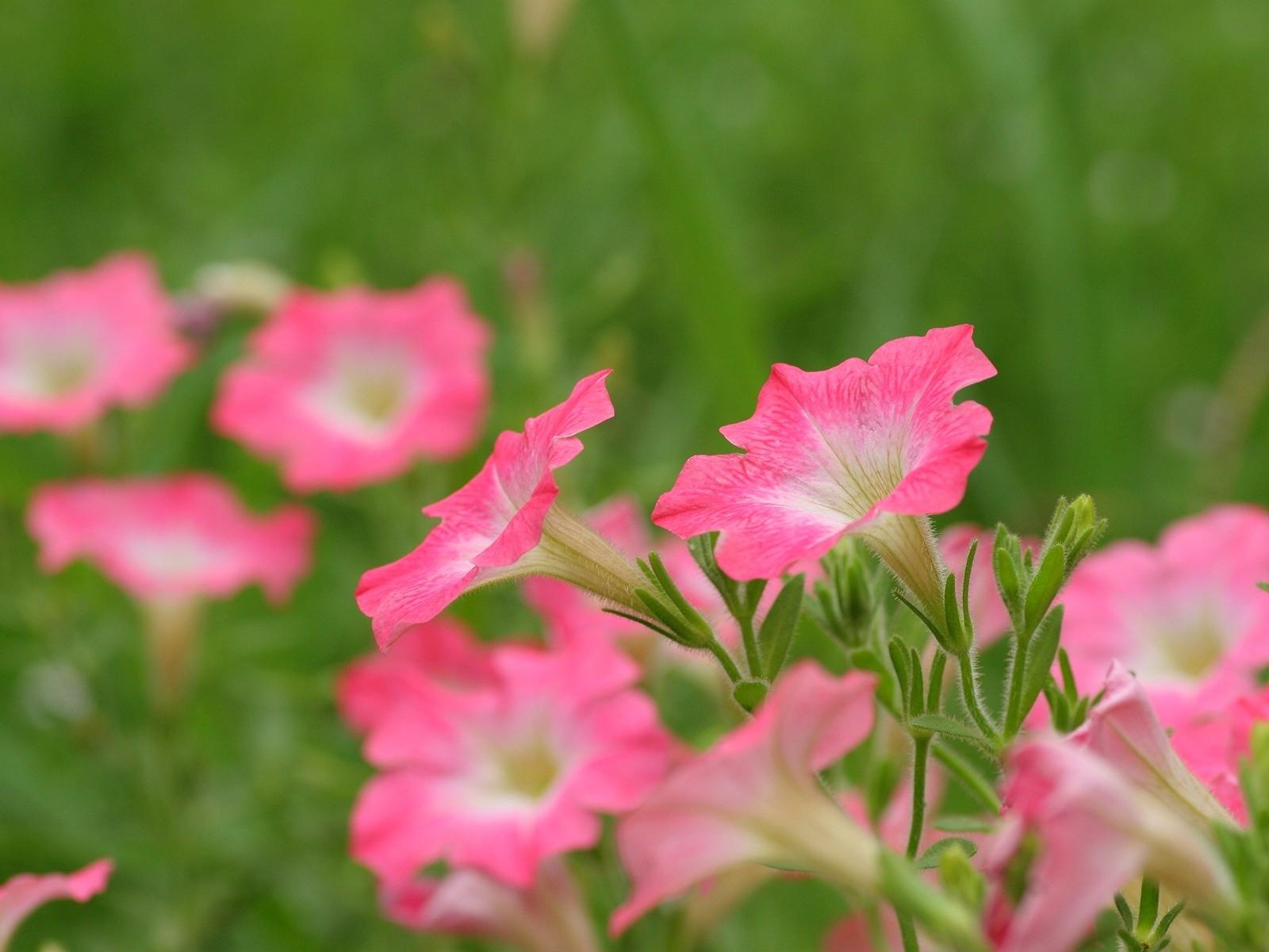 6930 скачать обои Растения, Цветы - заставки и картинки бесплатно