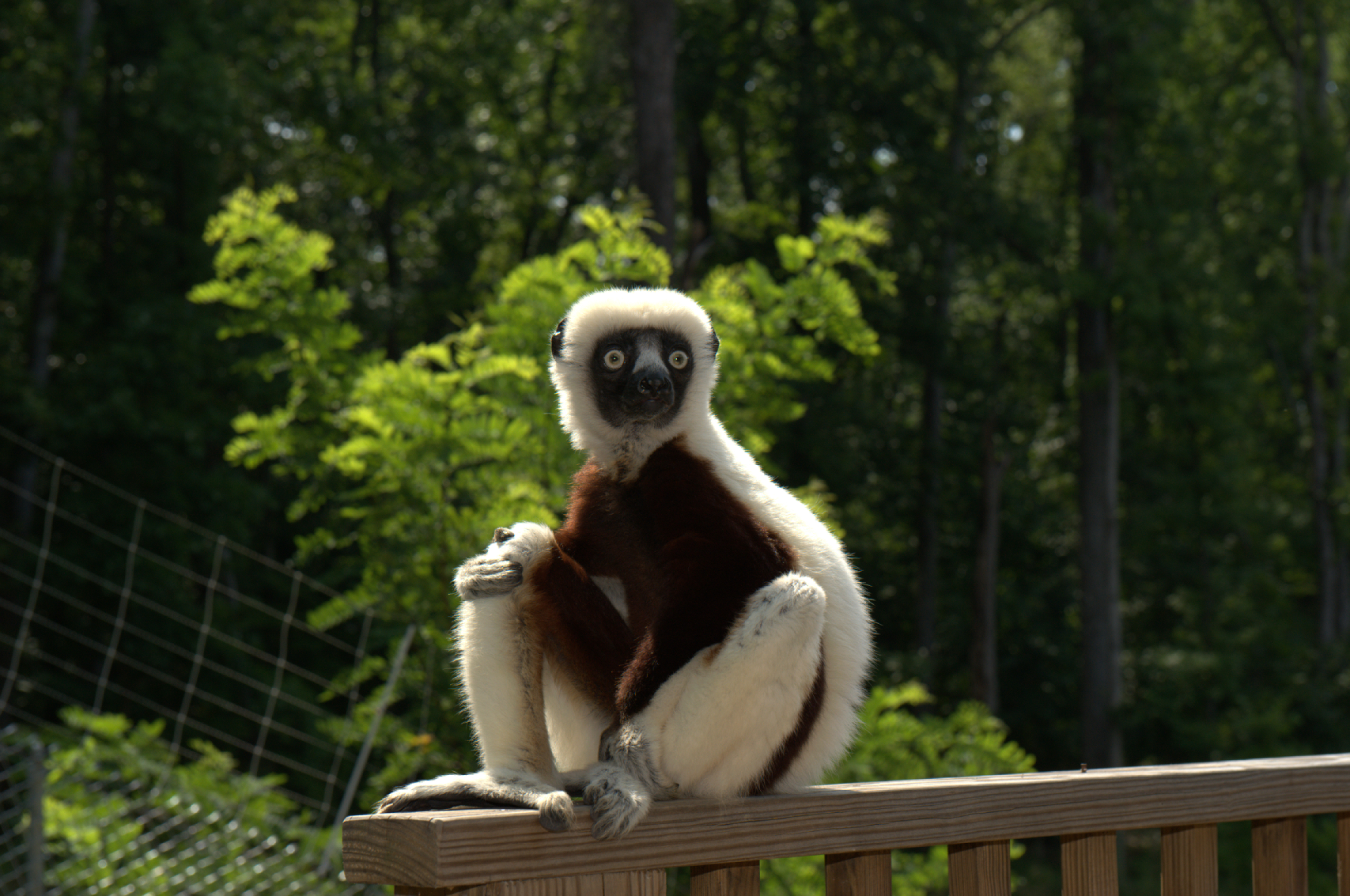 90152 download wallpaper Animals, Zoboomafoo, 2014, Lemur, Zoboo screensavers and pictures for free