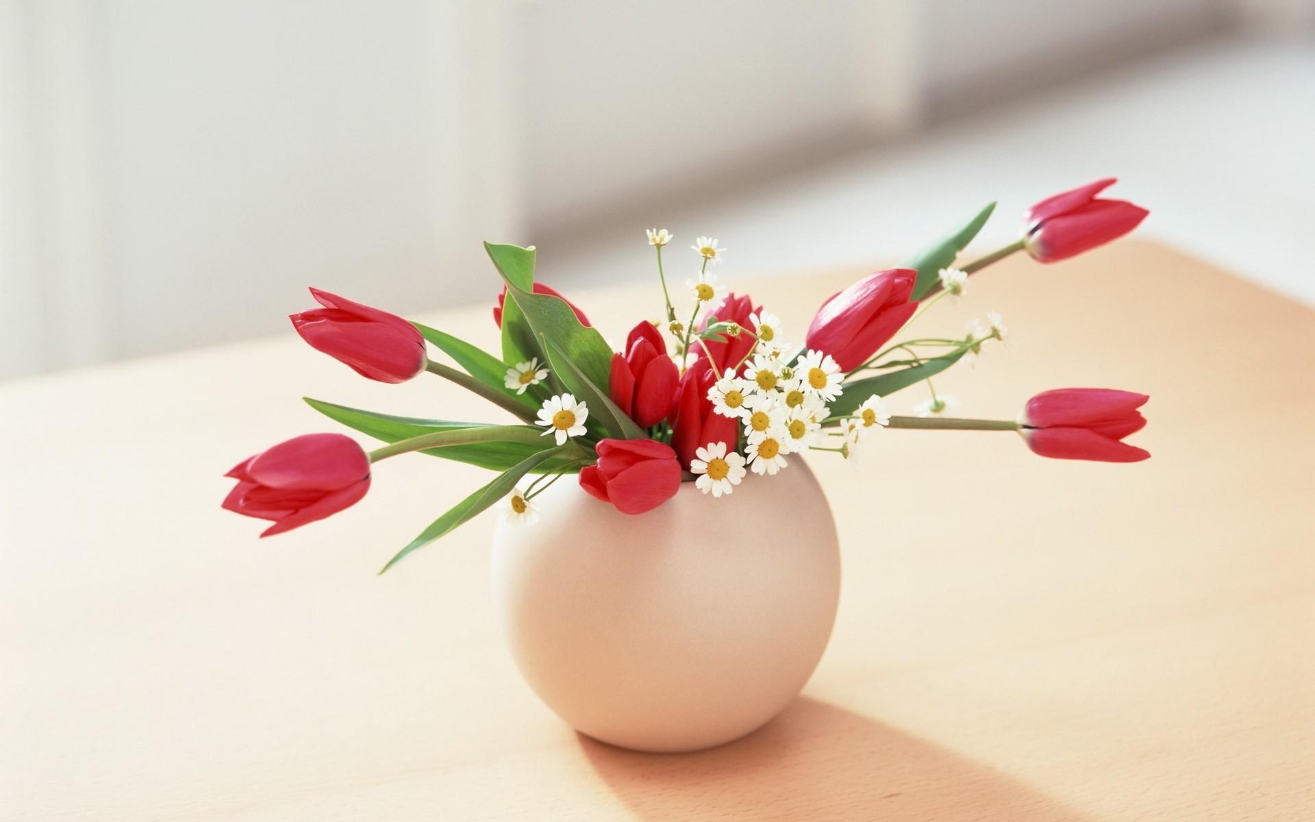 27523 скачать обои Растения, Цветы, Тюльпаны, Букеты - заставки и картинки бесплатно