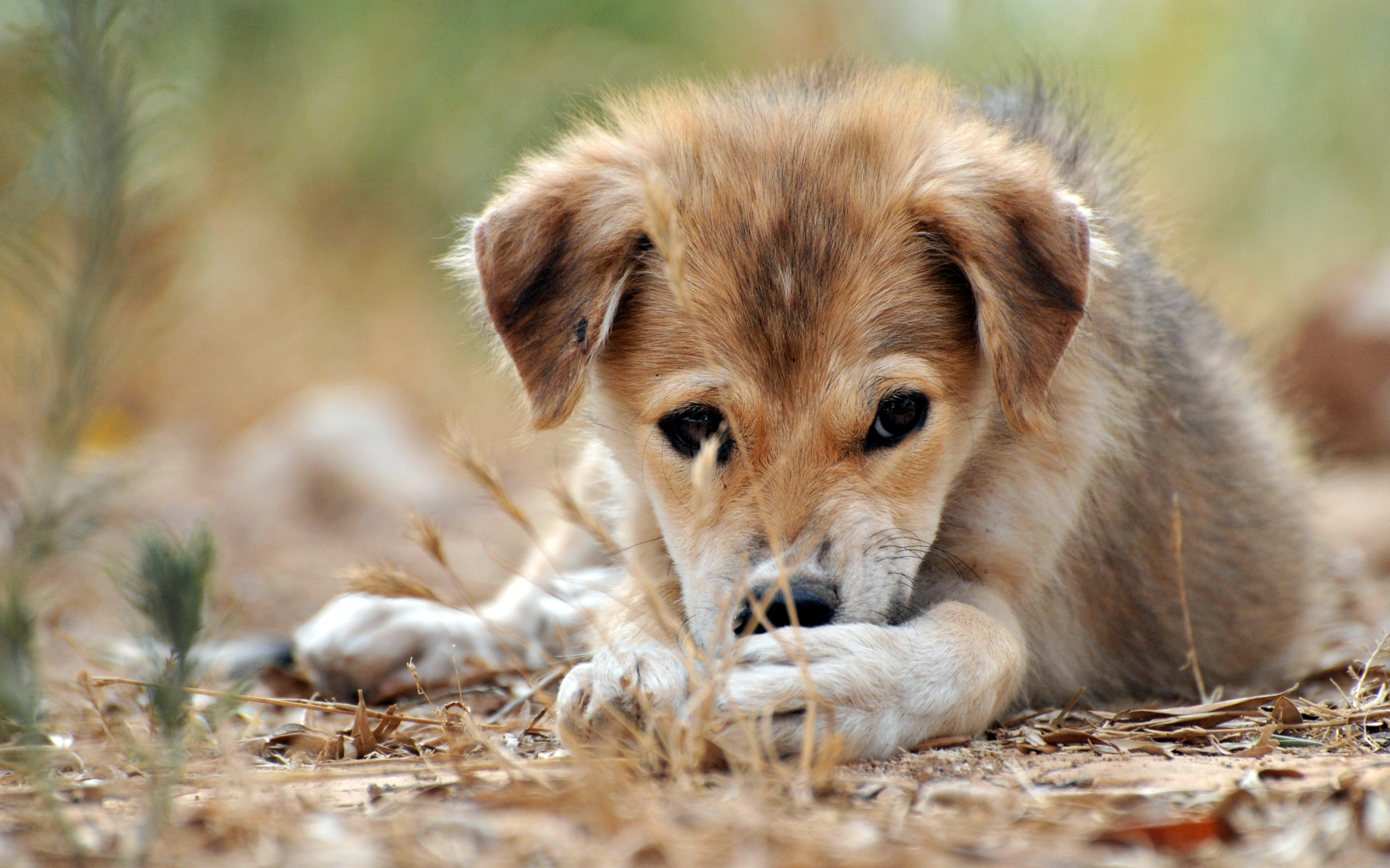 3065 download wallpaper Animals, Dogs screensavers and pictures for free