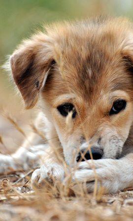 3065 descargar fondo de pantalla Animales, Perros: protectores de pantalla e imágenes gratis