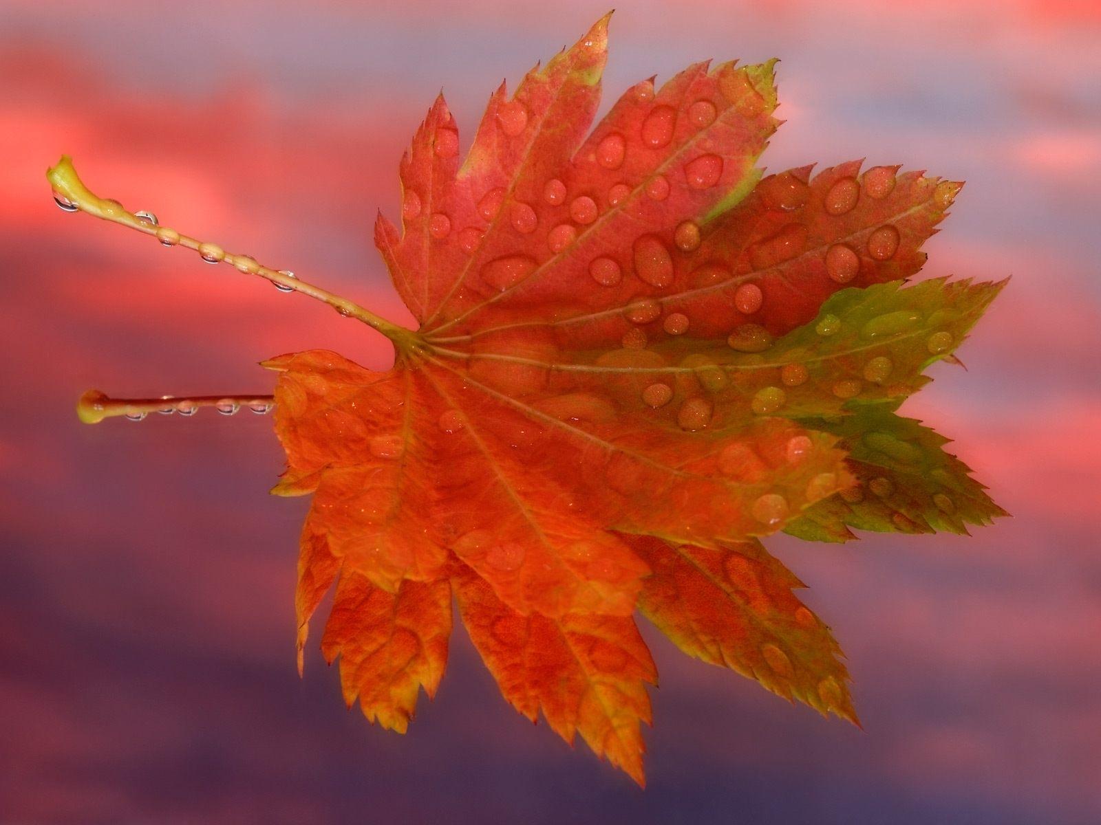 2385 скачать обои Растения, Листья - заставки и картинки бесплатно