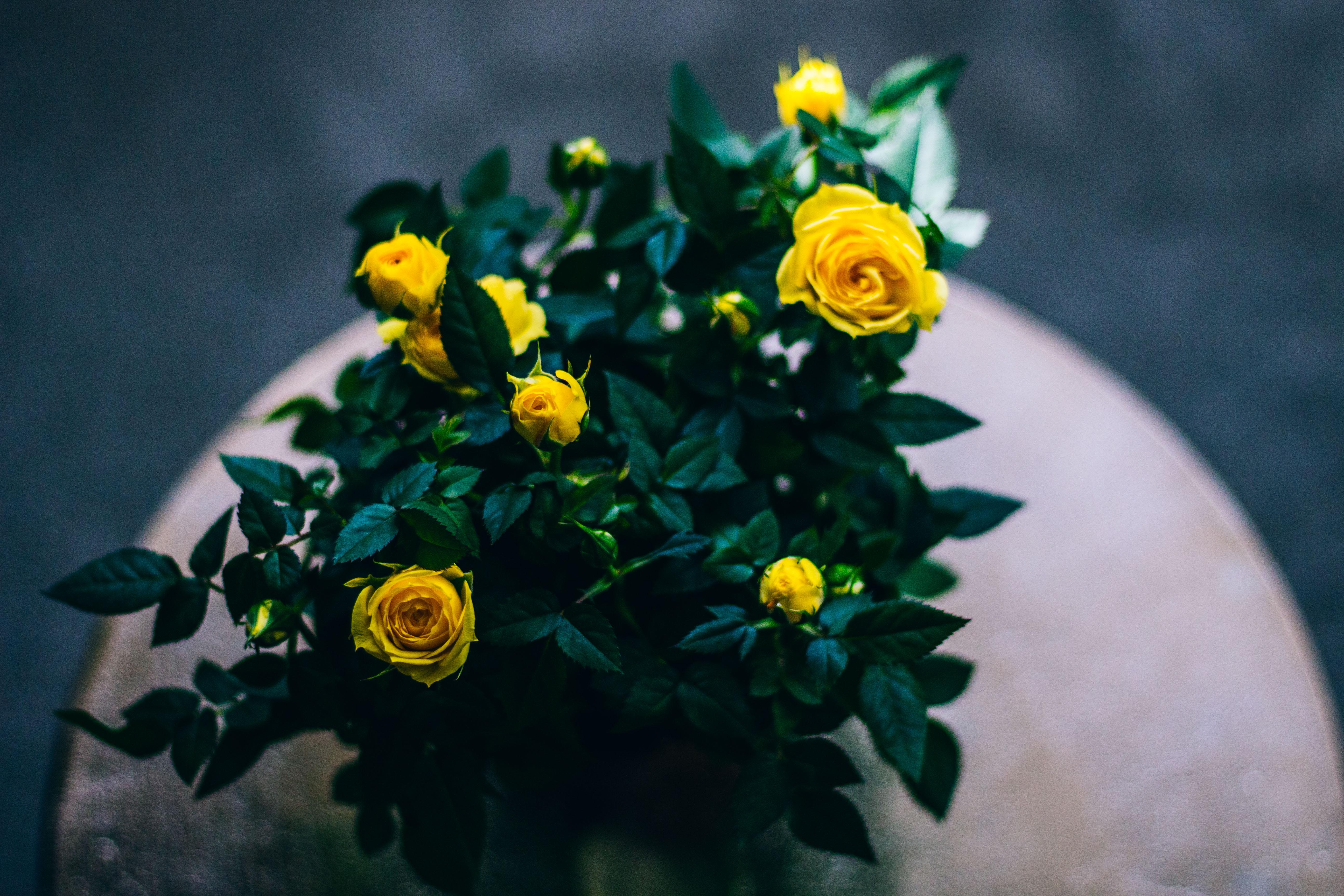 152072 Заставки и Обои Розы на телефон. Скачать Розы, Цветы, Букет, Бутоны картинки бесплатно