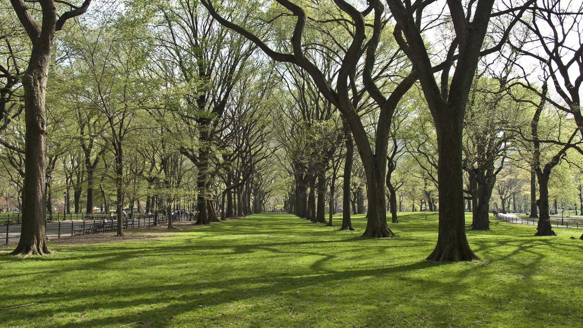 142803壁紙のダウンロード自然, 木, 公園, 草-スクリーンセーバーと写真を無料で