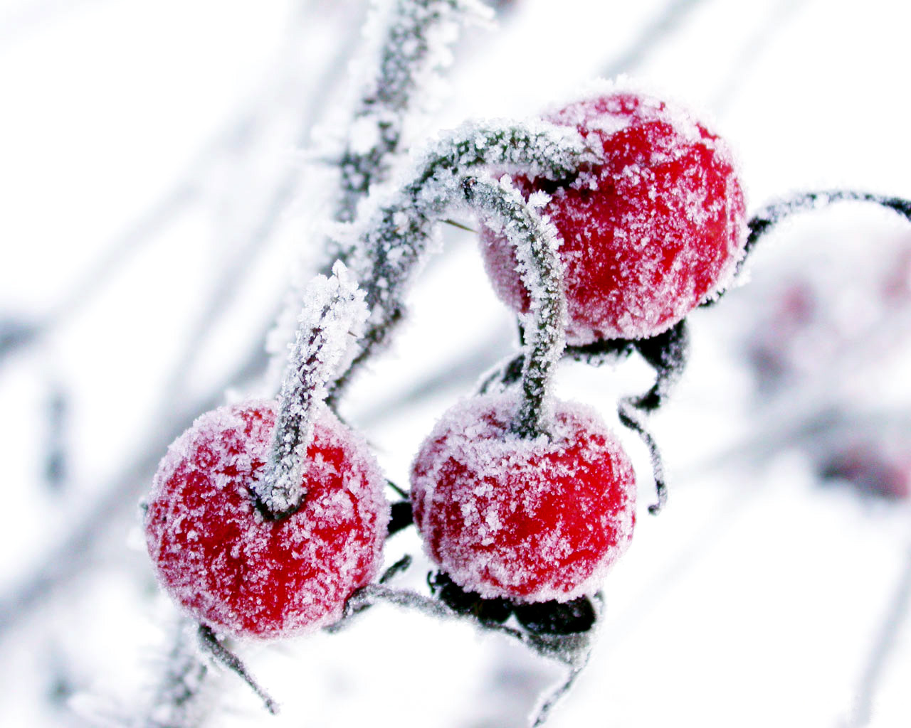 14551 download wallpaper Plants, Winter, Fruits, Berries screensavers and pictures for free