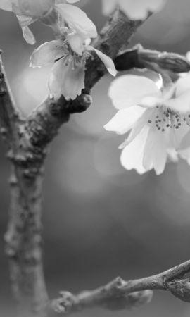 43110 télécharger le fond d'écran Plantes, Fleurs - économiseurs d'écran et images gratuitement