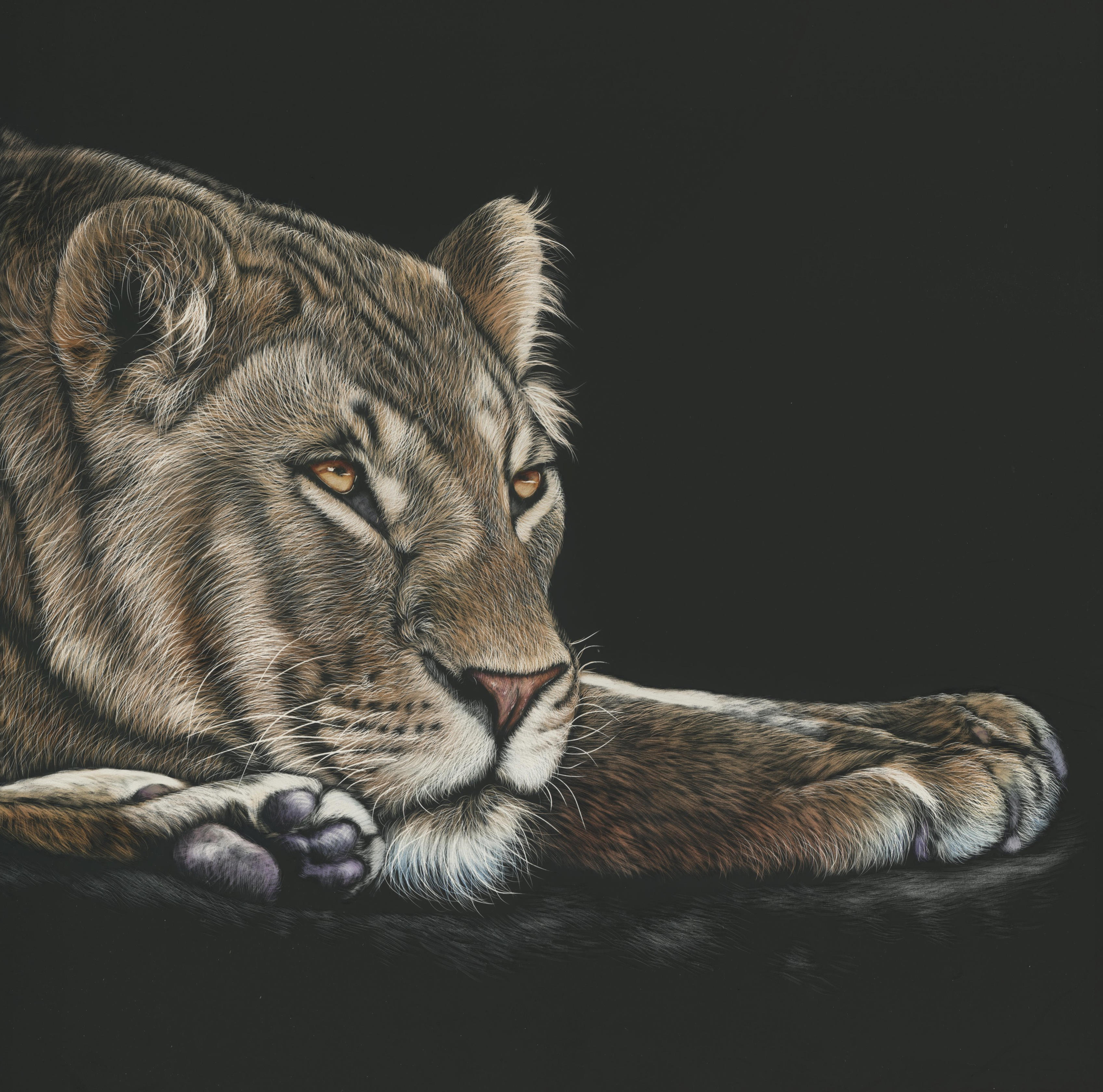 79102 download wallpaper Lioness, Big Cat, Sight, Opinion, Art, Picture, Drawing screensavers and pictures for free