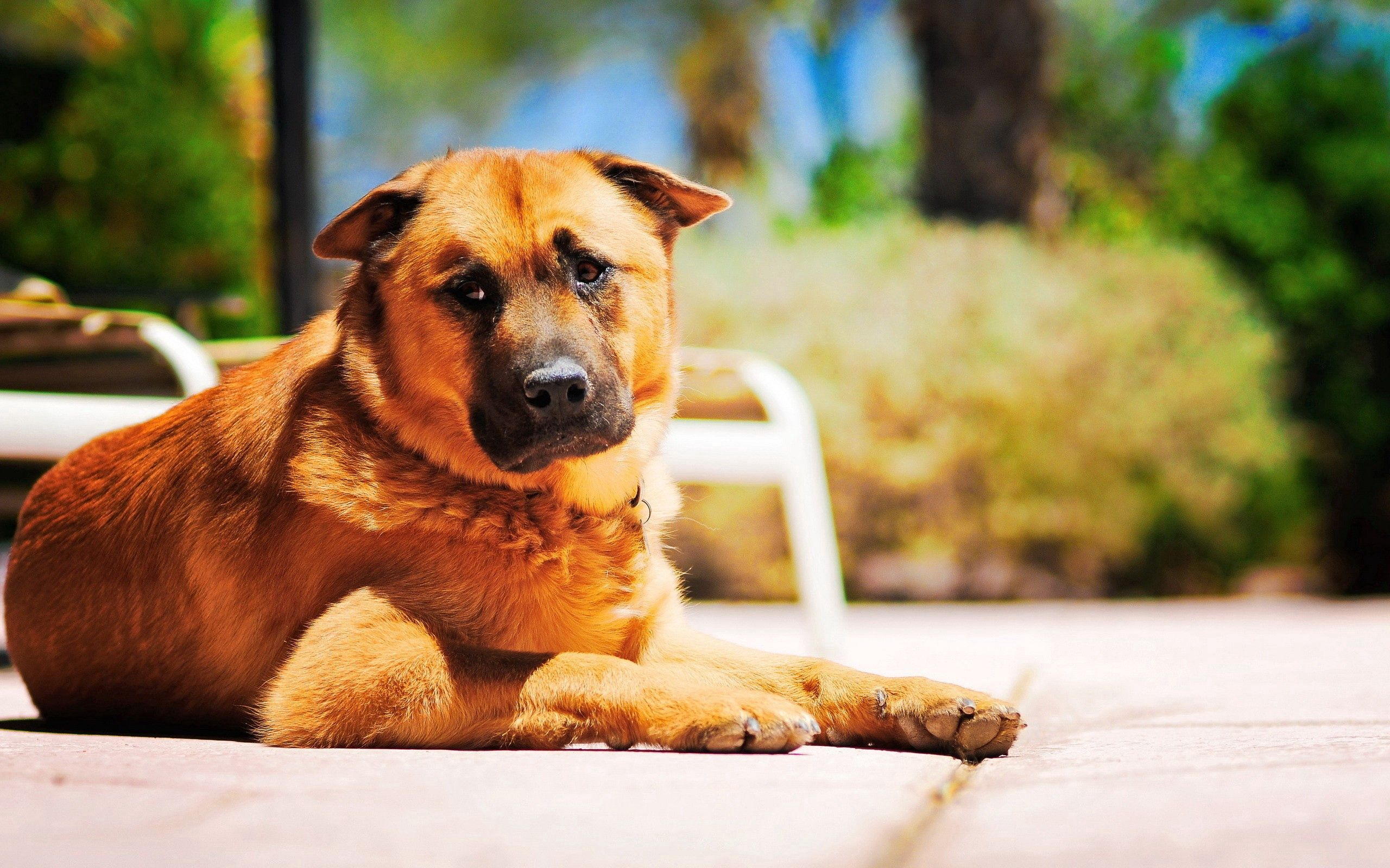 67520 download wallpaper Animals, Dog, To Lie Down, Lie, Sadness, Sorrow, Road screensavers and pictures for free