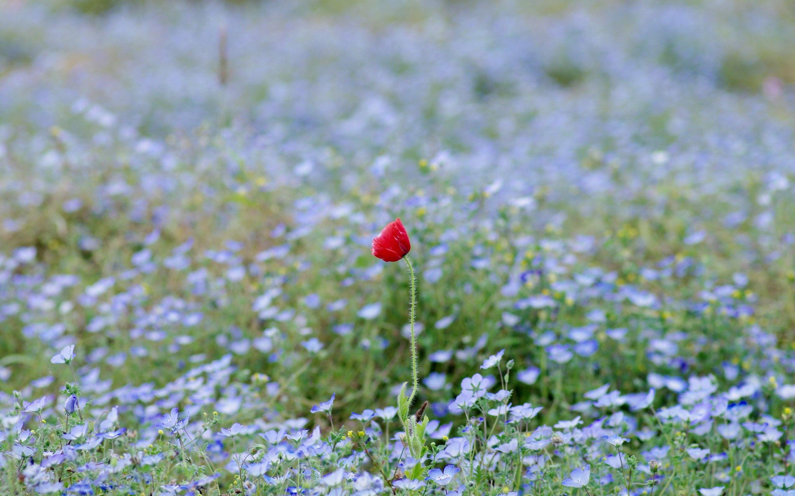 86594 скачать обои Природа, Трава, Поле, Цветок - заставки и картинки бесплатно