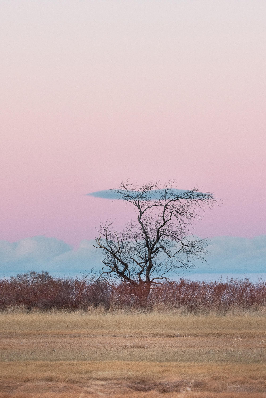 138715 免費下載壁紙 极简主义, 木头, 地平线, 草, 云 屏保和圖片