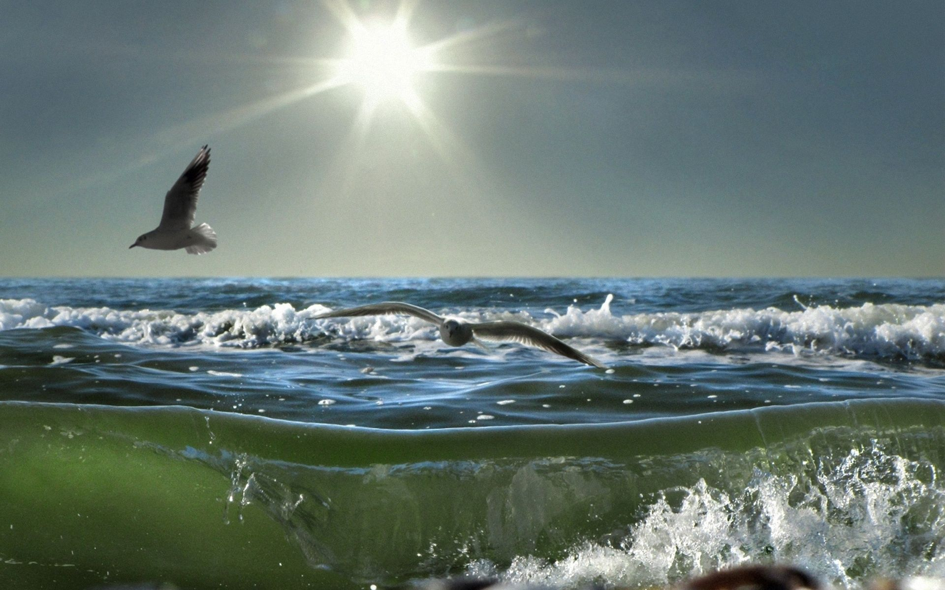 91001 download wallpaper Nature, Birds, Sea, Sun, Seagulls, Waves, Shine, Light, Spray, Day screensavers and pictures for free