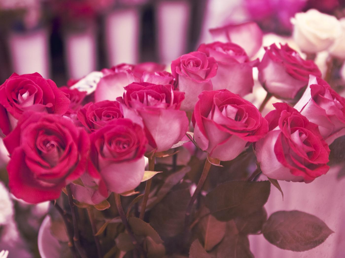 Handy-Wallpaper Pflanzen, Blumen, Roses, Postkarten, 8. März Internationaler Frauentag kostenlos herunterladen.
