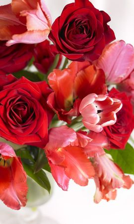 17496 baixar papel de parede Plantas, Flores, Rosas, Tulipas - protetores de tela e imagens gratuitamente