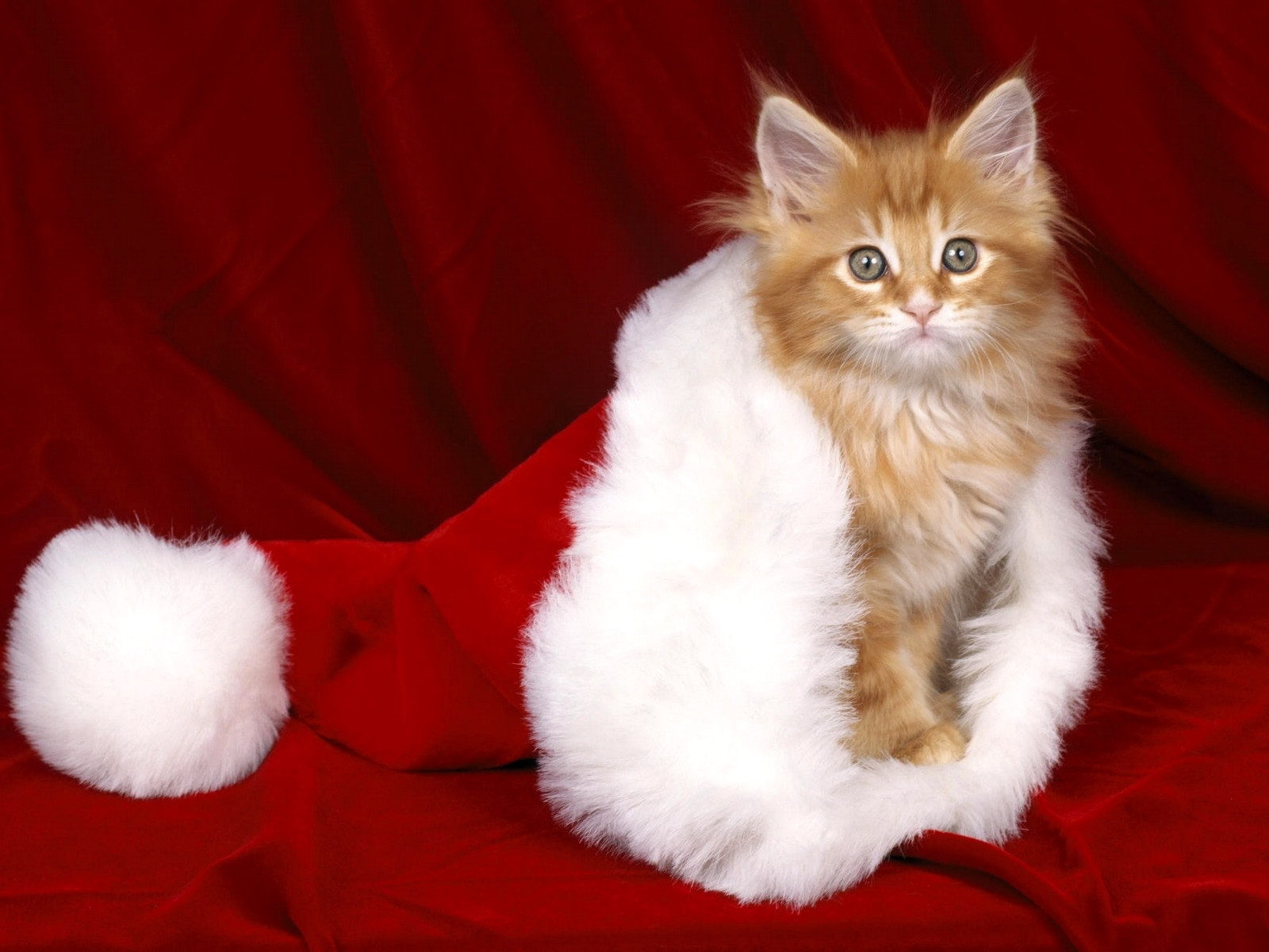 6224 download wallpaper Animals, Cats, New Year, Christmas, Xmas screensavers and pictures for free