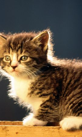 8669 download wallpaper Animals, Cats screensavers and pictures for free
