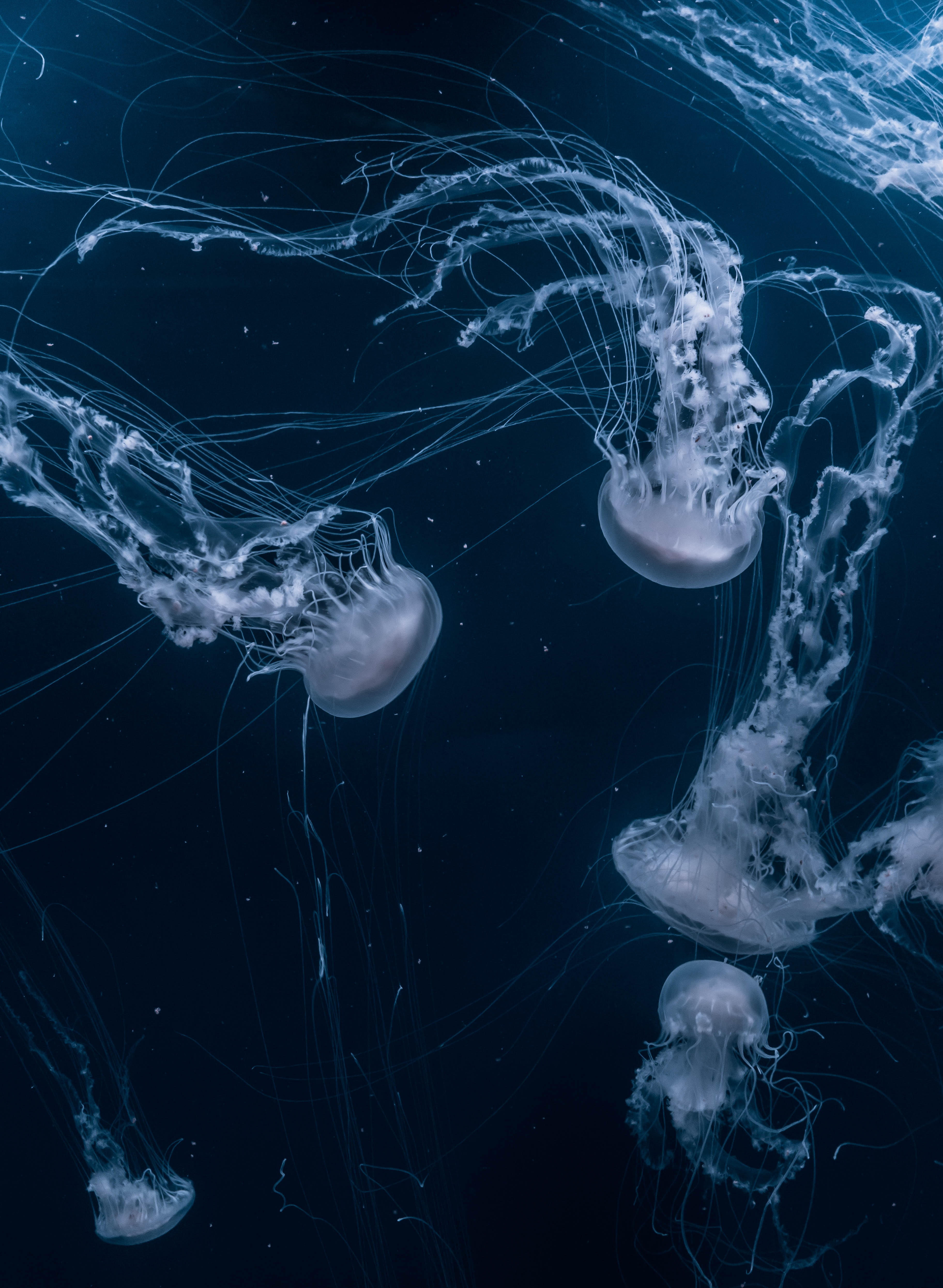 121723 download wallpaper Animals, Underwater World, To Swim, Swim, Ocean, Jellyfish screensavers and pictures for free