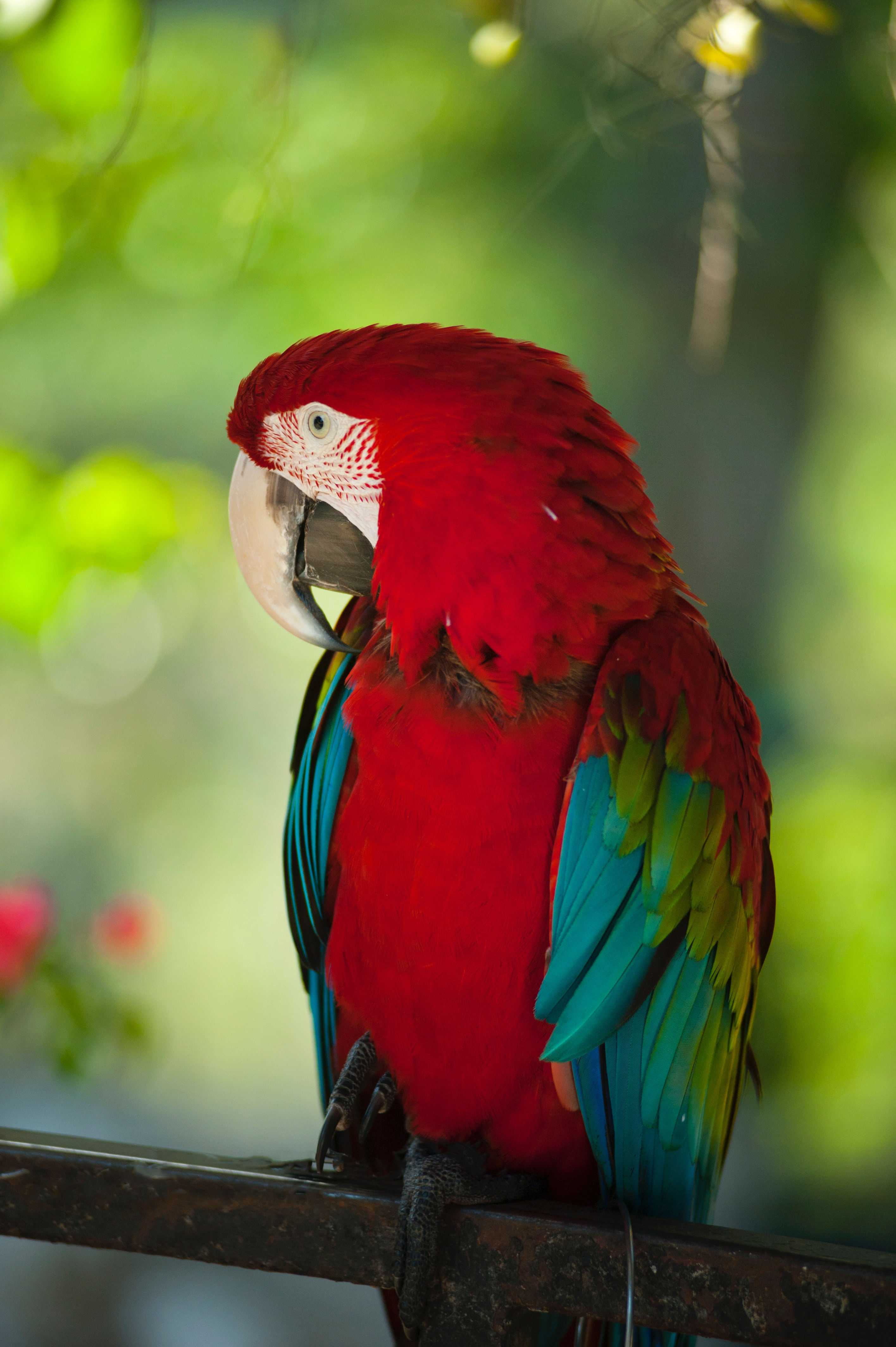 68122 download wallpaper Animals, Macaw, Parrots, Bird, Color, Wildlife screensavers and pictures for free