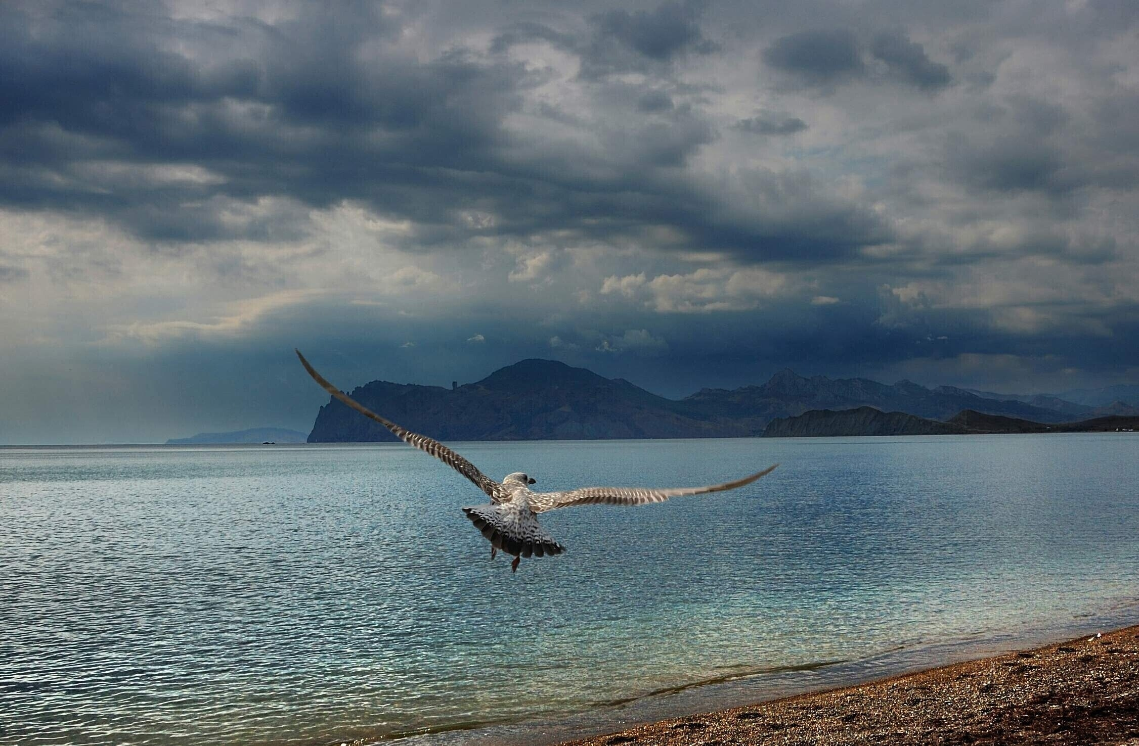76618 download wallpaper Animals, Bird, Predator, Sea, Flight, Wings, Sweep, Wave, Shore, Bank, Mountains screensavers and pictures for free