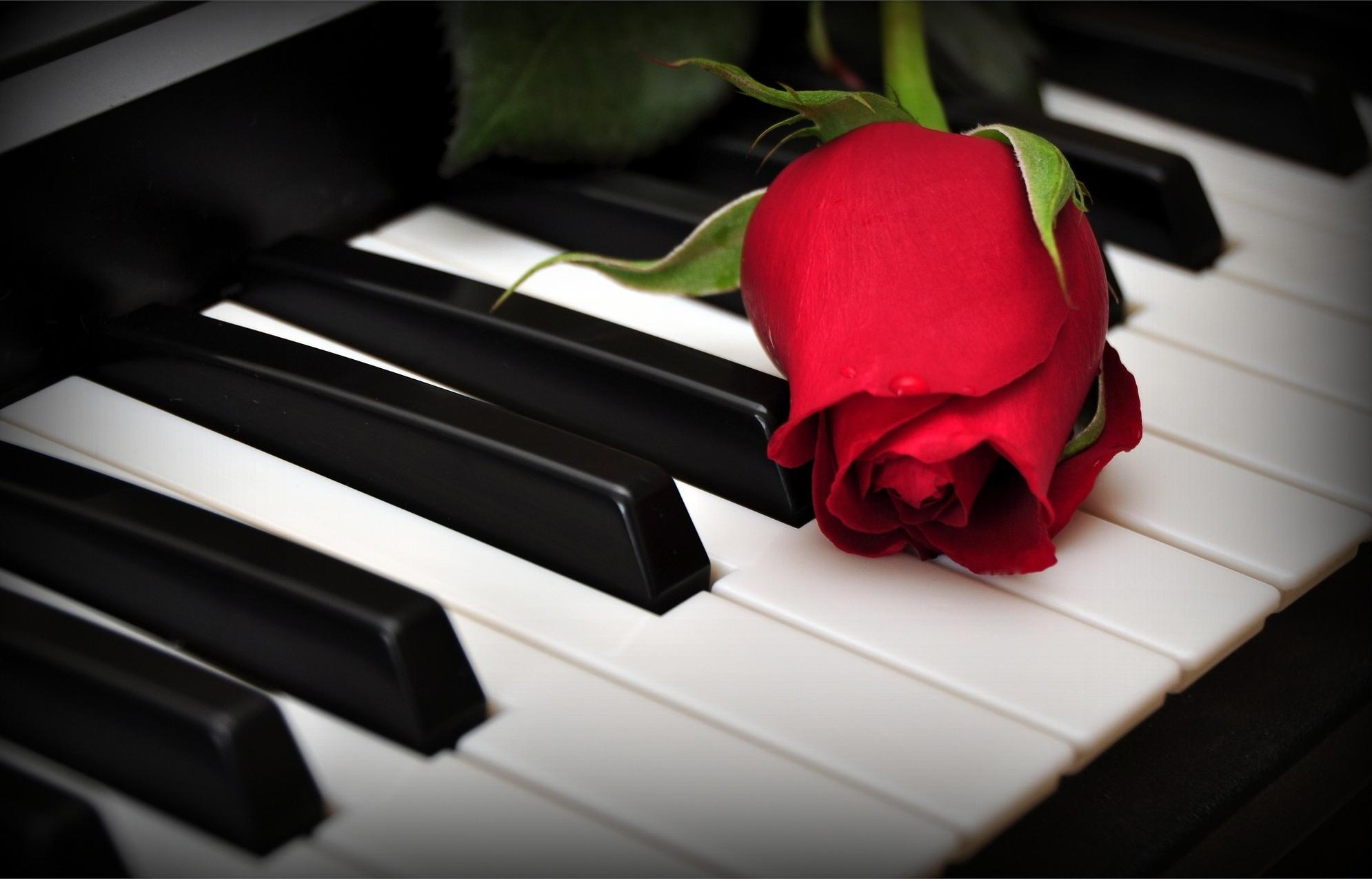 127939 download wallpaper Flowers, Flower, Keys, Roses, Piano screensavers and pictures for free