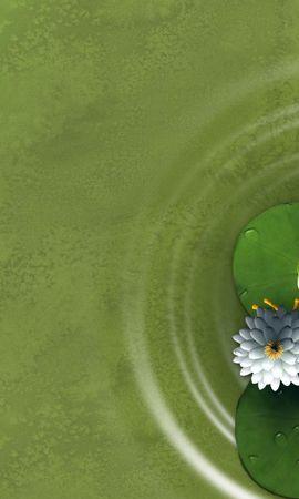 13776 baixar papel de parede Animais, Frogs - protetores de tela e imagens gratuitamente