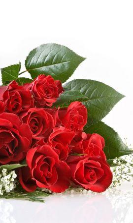 56 скачать обои Праздники, Цветы, Розы - заставки и картинки бесплатно