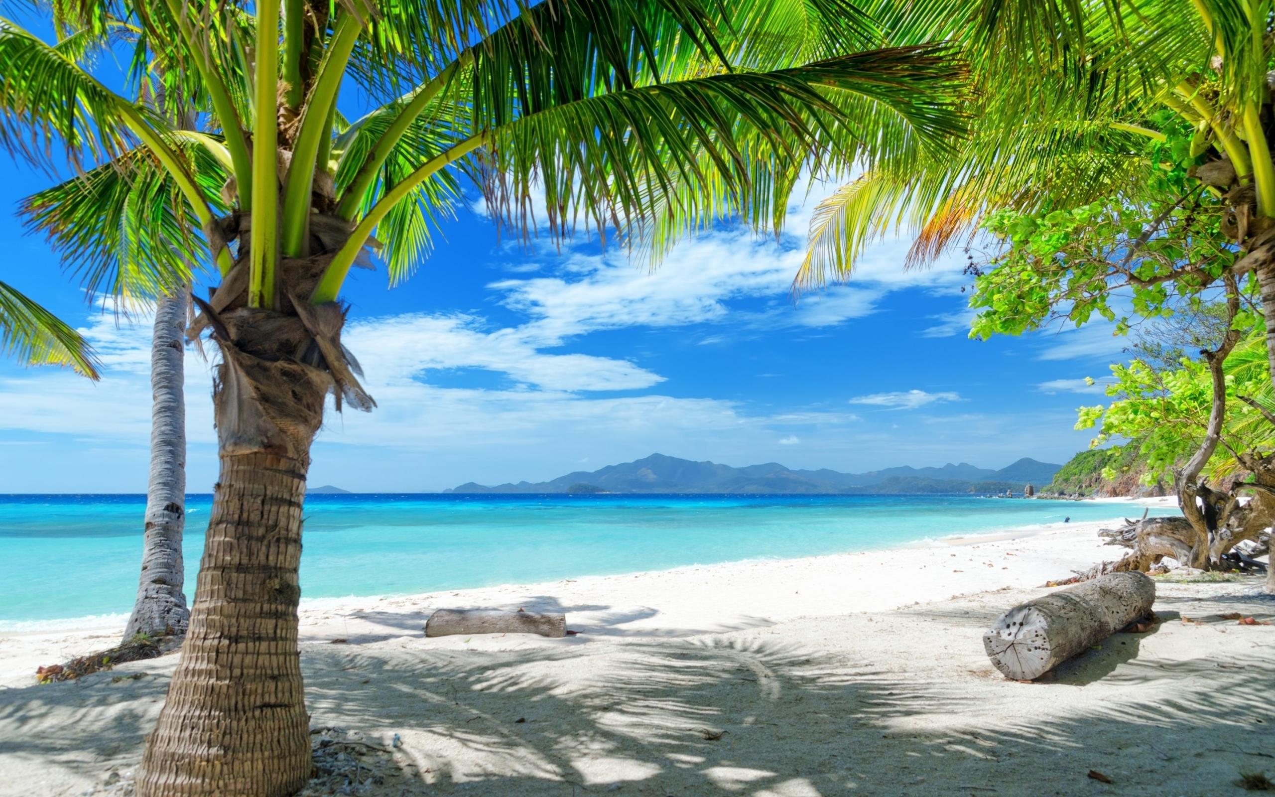 19271 скачать обои Пейзаж, Небо, Море, Пляж, Песок, Пальмы - заставки и картинки бесплатно