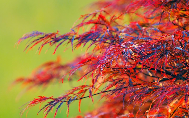 Скачать картинку Фон, Деревья, Растения в телефон бесплатно.