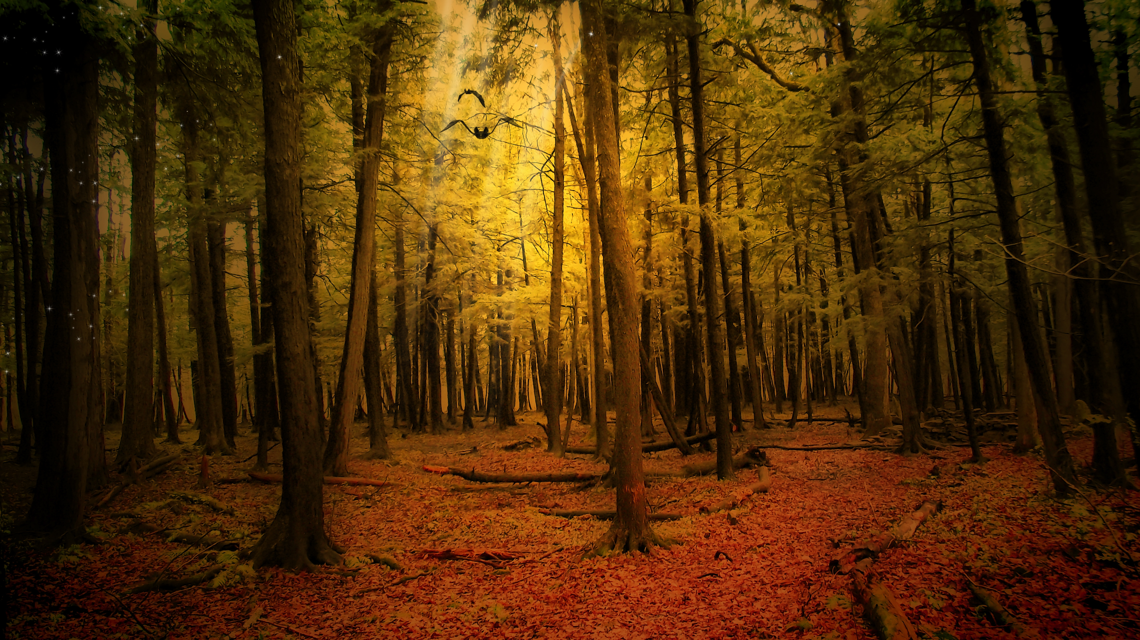 150256 download wallpaper Nature, Autumn, Forest, Landscape screensavers and pictures for free