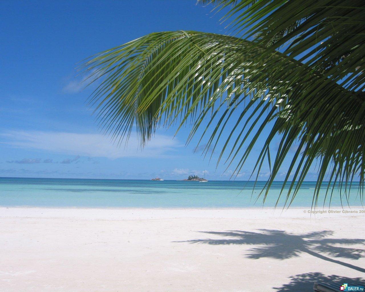 12663壁紙のダウンロード風景, 木, 海, ビーチ, パームス, 夏-スクリーンセーバーと写真を無料で