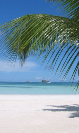 12663 download wallpaper Landscape, Trees, Sea, Beach, Palms, Summer screensavers and pictures for free