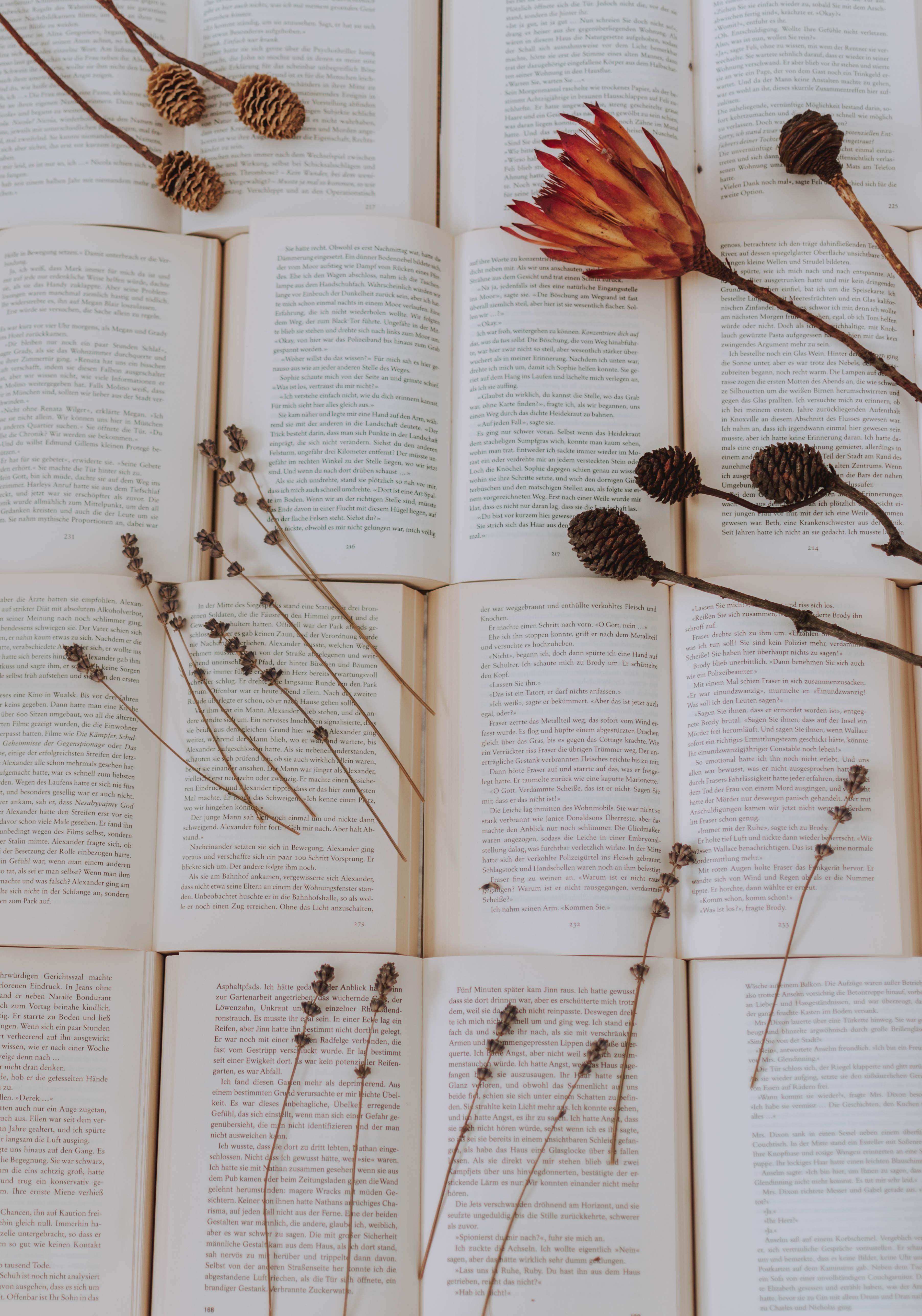 136489 скачать обои Разное, Книги, Гербарий, Сухой, Растения, Цветы - заставки и картинки бесплатно