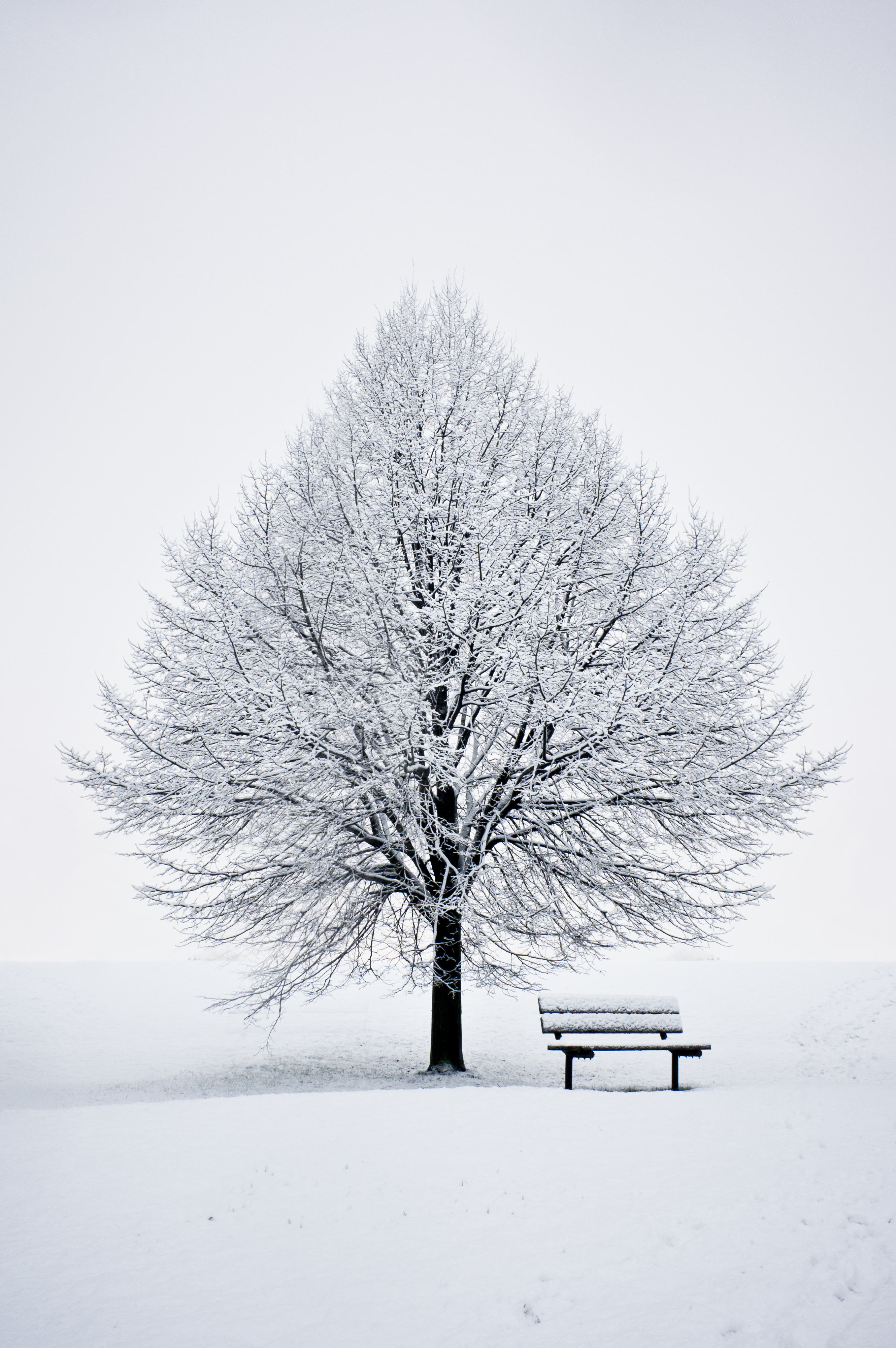 59325 Screensavers and Wallpapers Bench for phone. Download Winter, Snow, Wood, Tree, Minimalism, Bench pictures for free