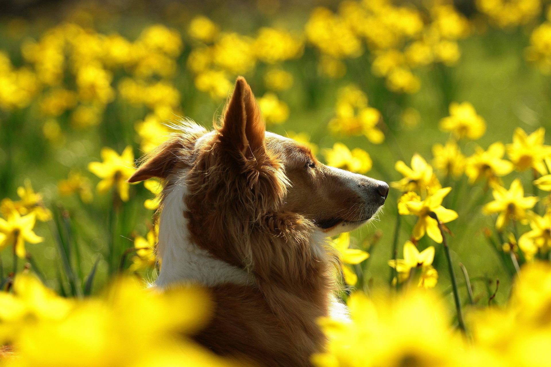 142882 скачать обои Животные, Собака, Морда, Профиль, Цветы - заставки и картинки бесплатно