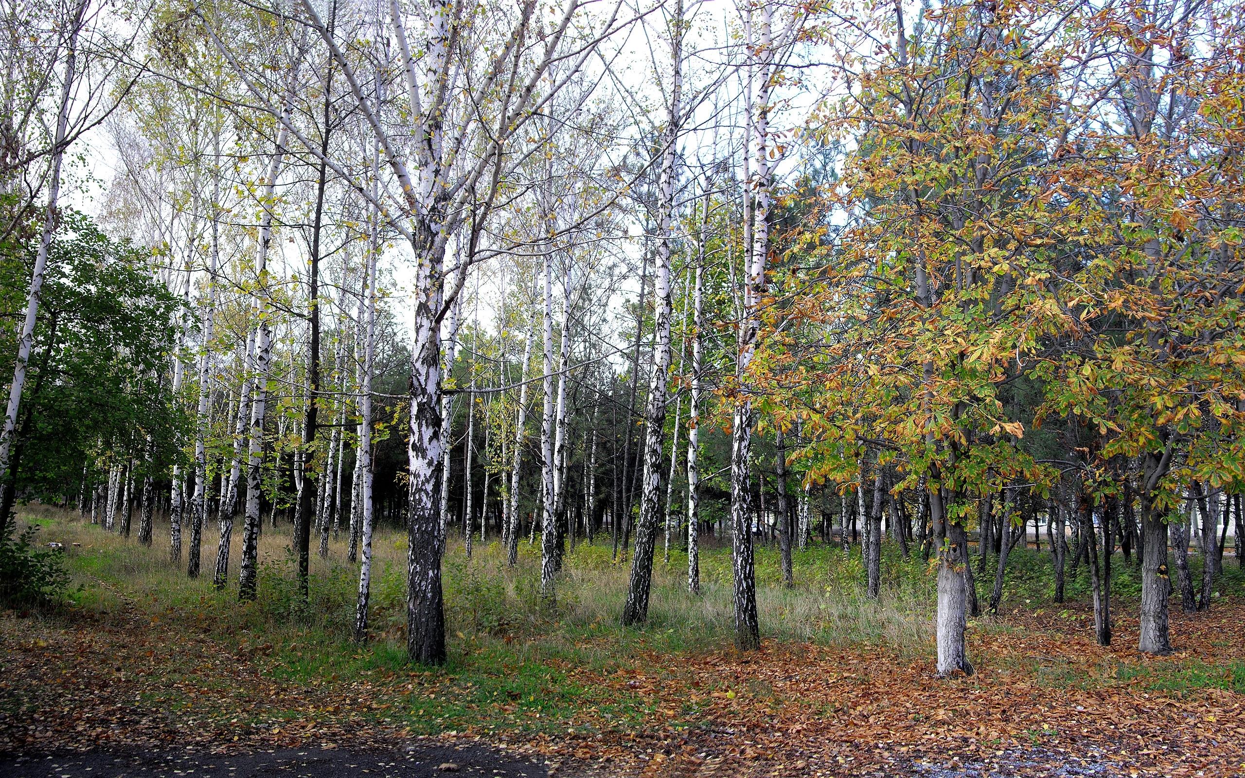 9099 скачать обои Пейзаж, Деревья - заставки и картинки бесплатно