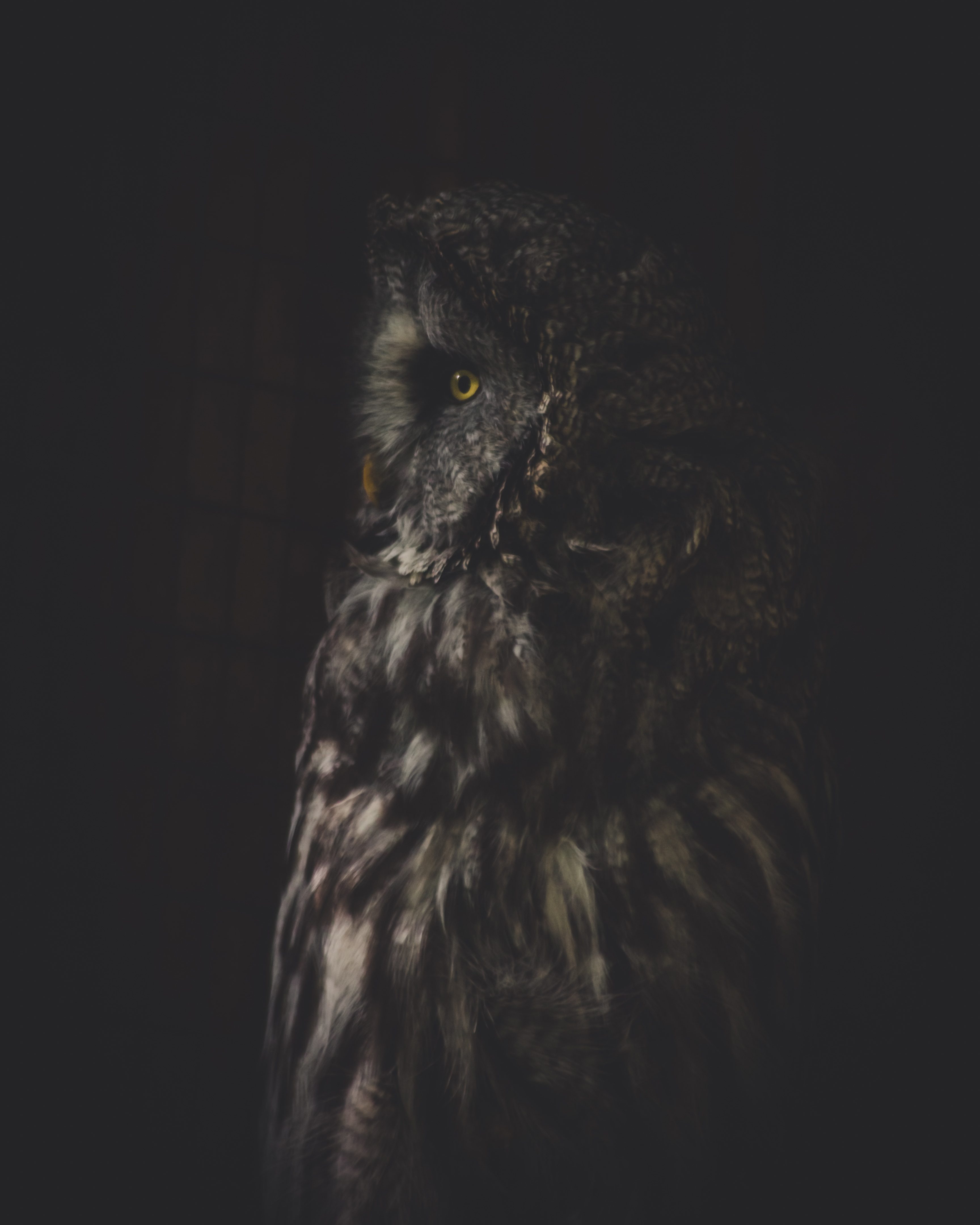 58493 download wallpaper Animals, Owl, Bird, Dark, Predator, Looks, Turned, Rotated screensavers and pictures for free