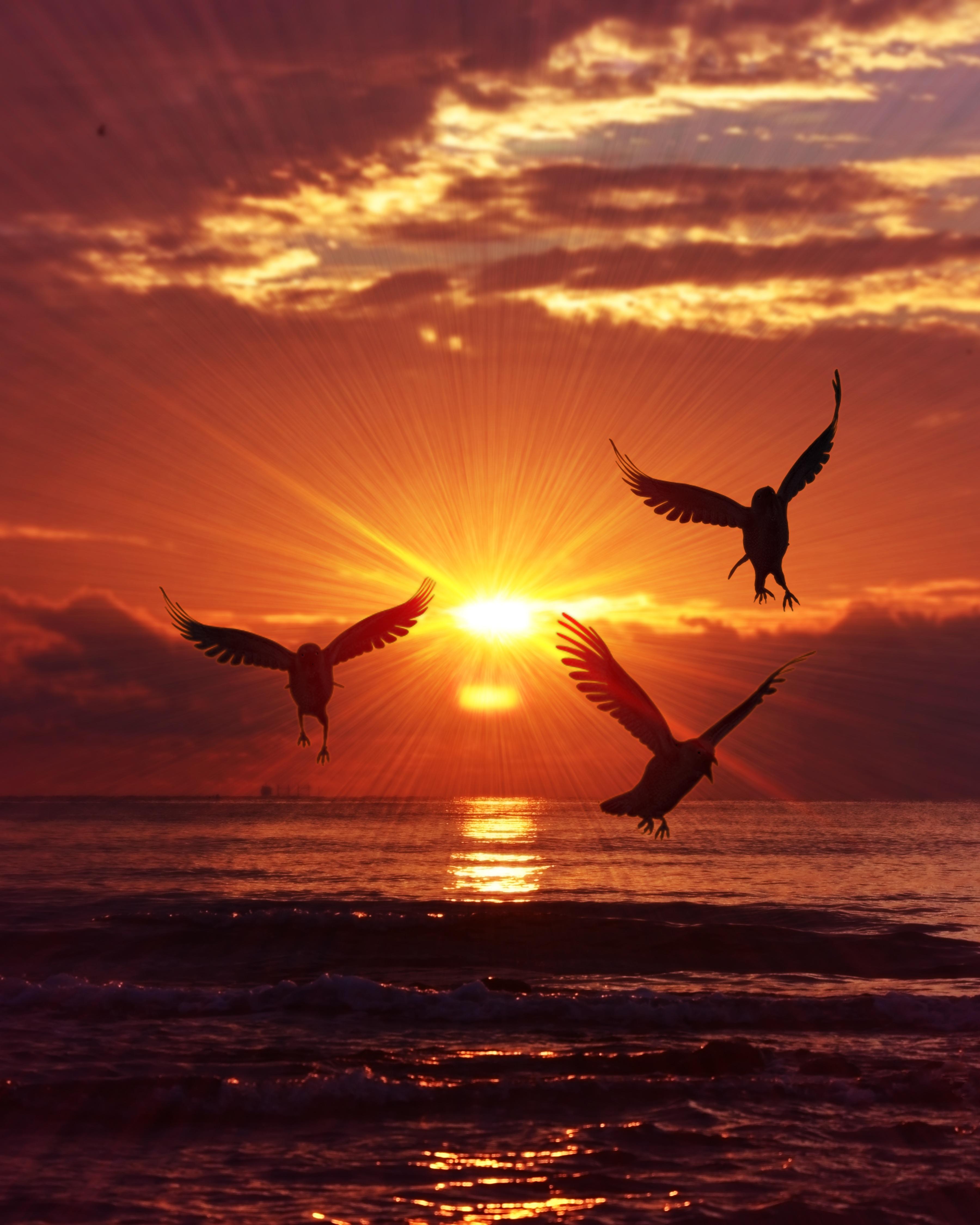 68746 Заставки и Обои Птицы на телефон. Скачать Птицы, Восход, Природа, Море, Силуэты картинки бесплатно