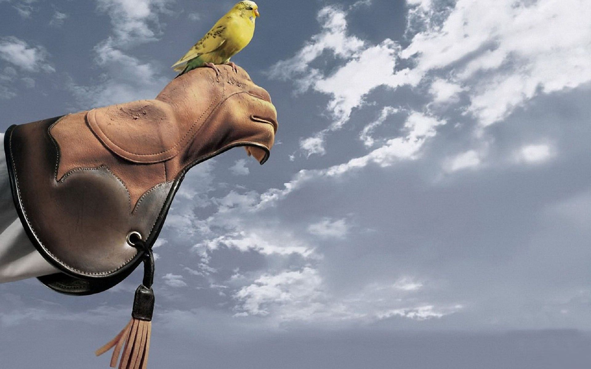 73097 download wallpaper Animals, Parrots, Hand, Sky, Color screensavers and pictures for free