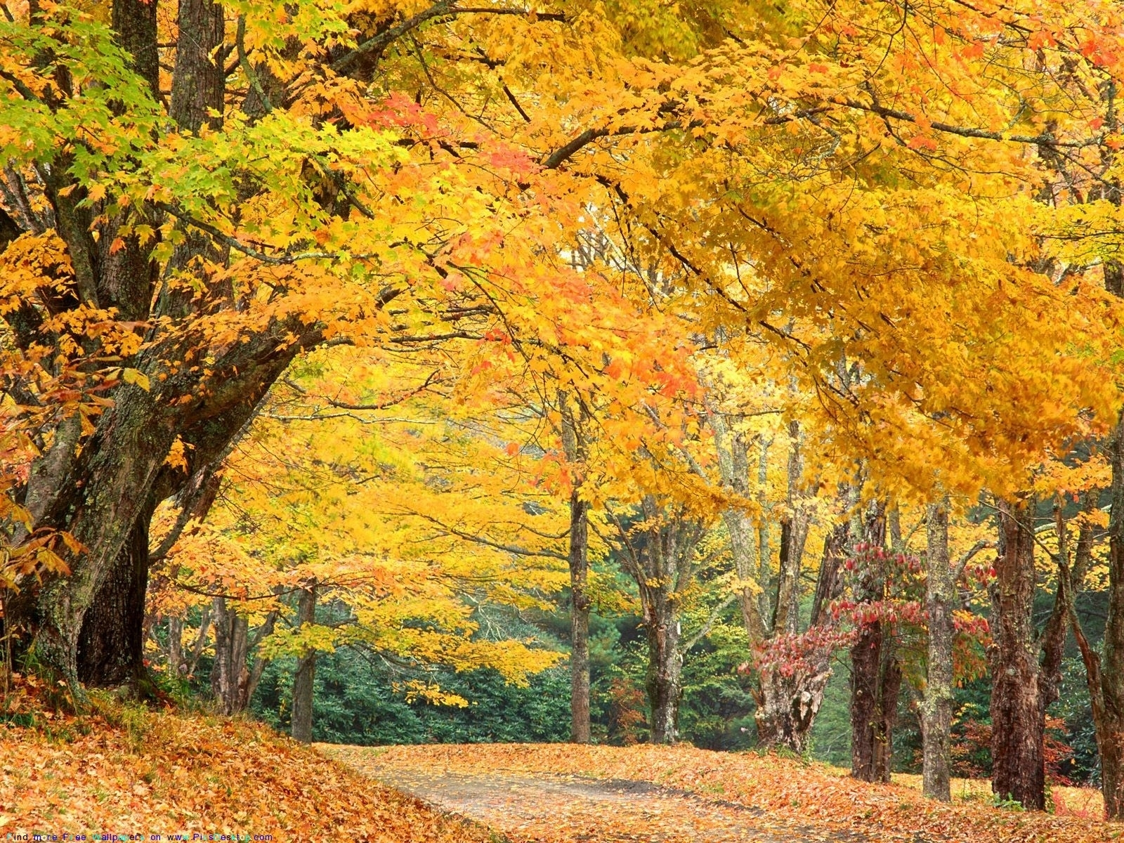 1006 download wallpaper Landscape, Trees, Autumn screensavers and pictures for free