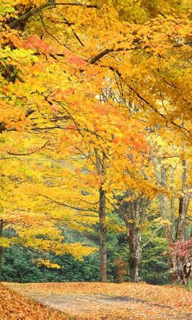 1006 скачать обои Пейзаж, Деревья, Осень - заставки и картинки бесплатно